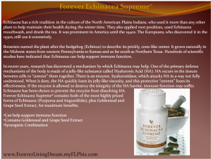 Forever Echinacea Supreme®