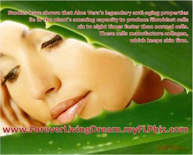 aloe vera's anti aging properties